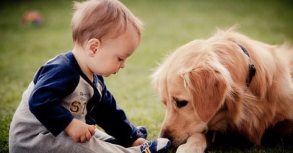 """""""É muito importante preparar seu melhor amigo para chegada do novo membro da família"""""""