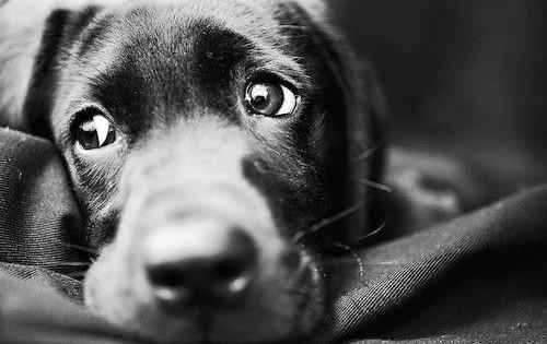 cachorro_magoado_matilhando