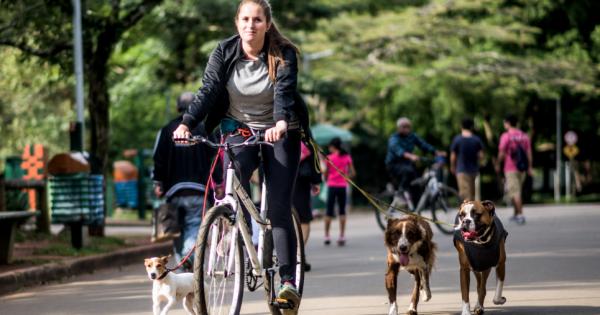 Atividades com bike são indicadas para cães de energia alta