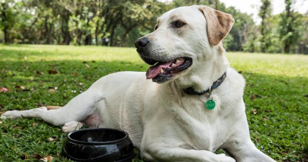 Ignorar estímulos como barulhos e outros cães, é um ótimo exercício de autocontrole